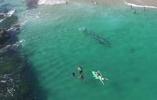ballena gris playa california