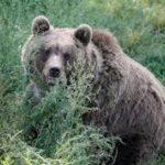Cómo no ganar la confianza de un oso