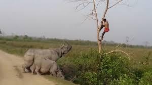 rinoceronte hombre arbol