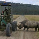 Rinocerontes atacando todo y a todos