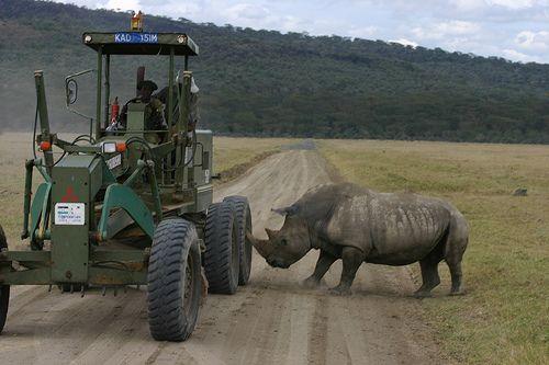 rinoceronte-atacando-tractor