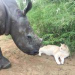 Gato y joven rinoceronte se convierten en grandes amigos