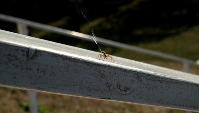 araña preparandose para volar