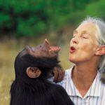 Entrevista a Jane Goodall en 2016