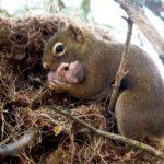 nacimiento-ardilla-cria