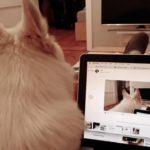 perro aullando ordenador