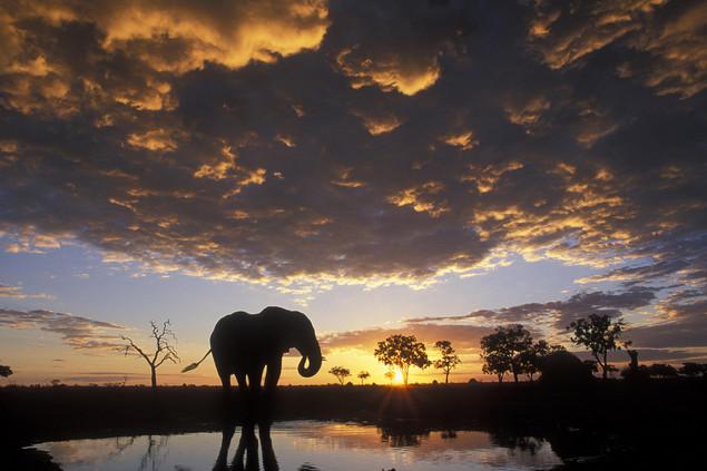 botsuana elefante