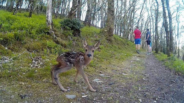 cria-ciervo-bosque