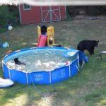 familia-de-osos-parque-atracciones