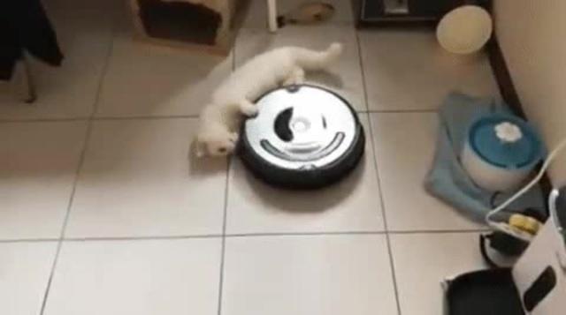 gato girando