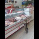 Gato pidiendo comida en una carniceria