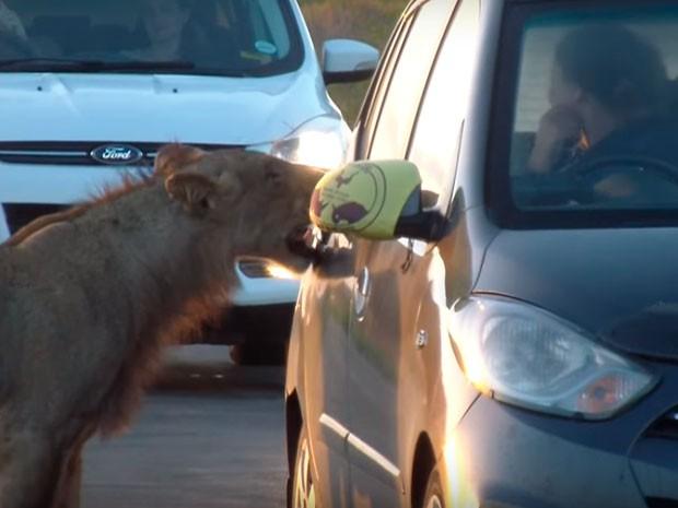 leona abriendo coche
