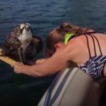 Mujer rescata a un águila pescadora