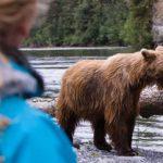Encuentro con osos en Rusia en 360º