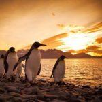 Pingüinos cantandole a la puesta de sol