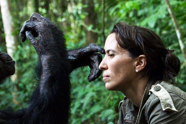 rebeca-atencia-congo-chimpance