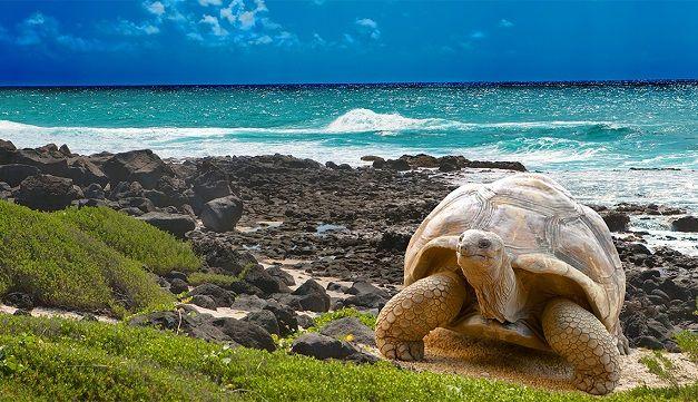 sudamerica-galapagos-tortuga