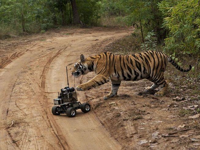 tigre-robot