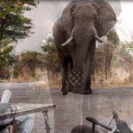 Encuentro extremadamente cercano con un elefante