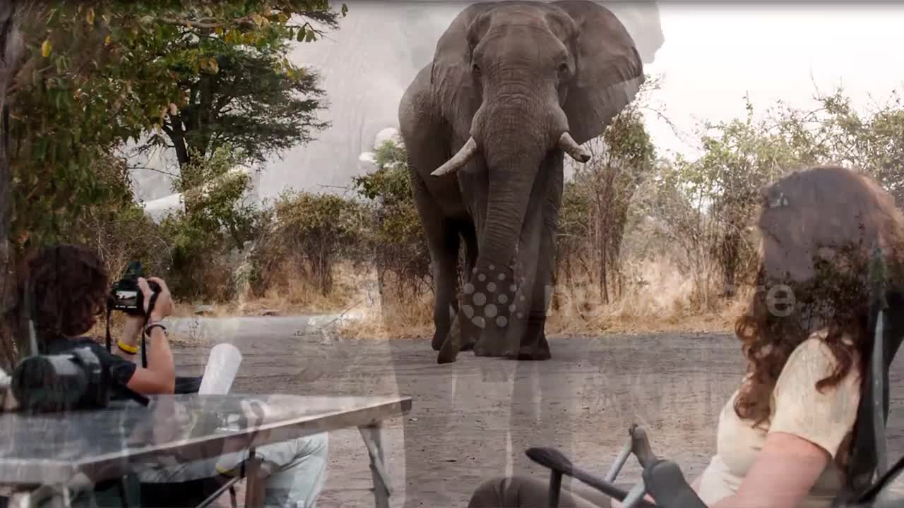 encuentro cercano con un elefante