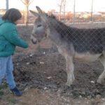 Reencuentro de un burro con la niña que lo cuidó