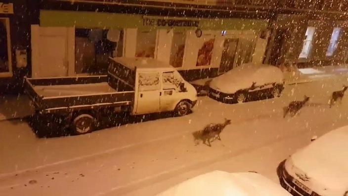 ciervos en la noche nevada Dunkeld