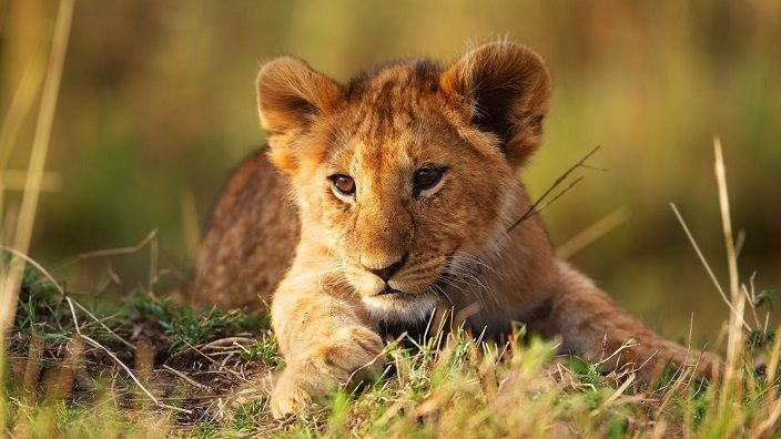 documental-leon-cachorro