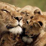 Documental – Cazadores de África, Lazos de Sangre (HD)