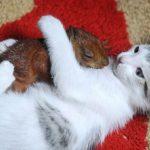 Gato y ardilla jugando sin parar