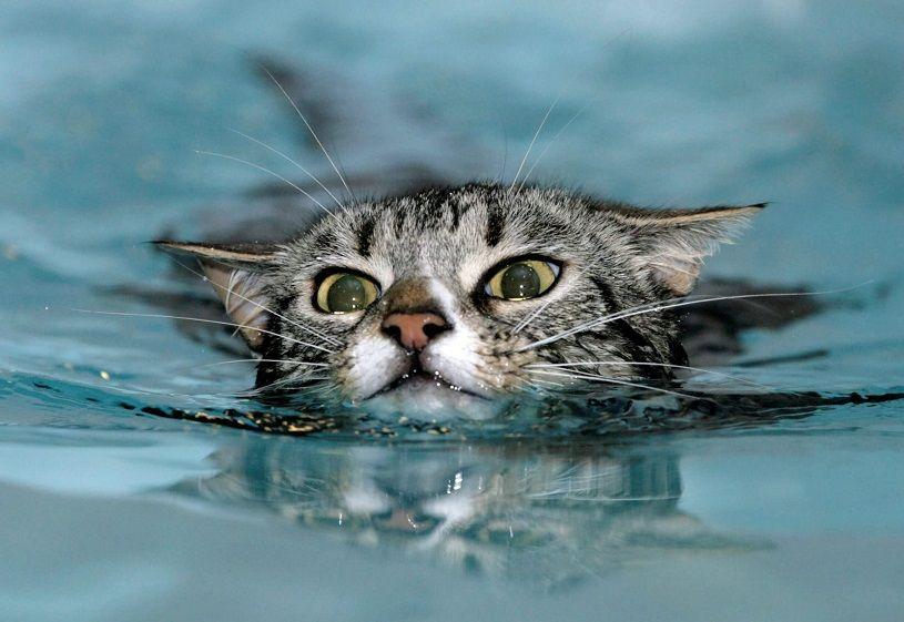 gato-piscina