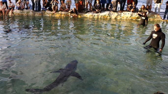 gran tiburon blanco piscina