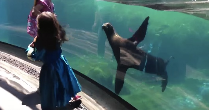 leon marino niña acuario