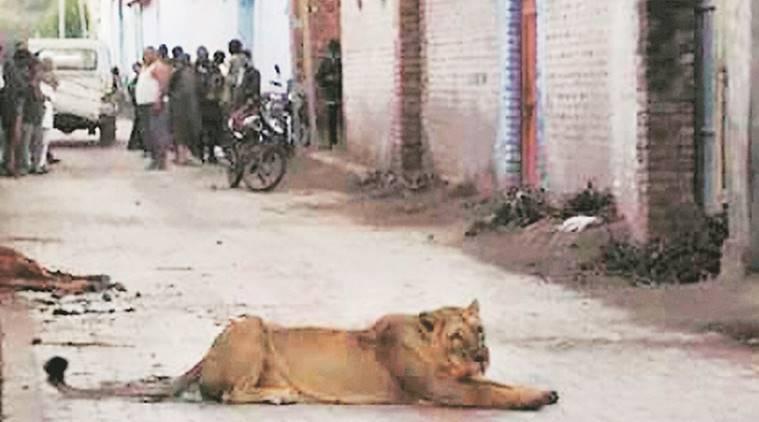 leona en la calle india