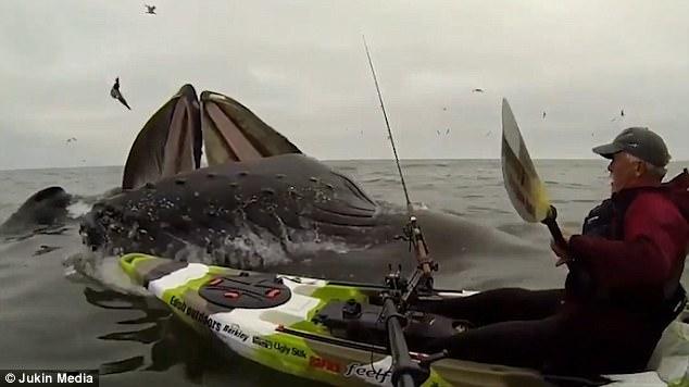 encuentro ballenas kayak
