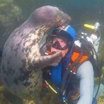 Asombroso saludo entre una foca y un buzo