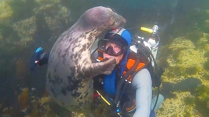 foca-saluda-buzo