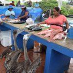 ¡Fiesta! Mercado de pescado en las Galápagos