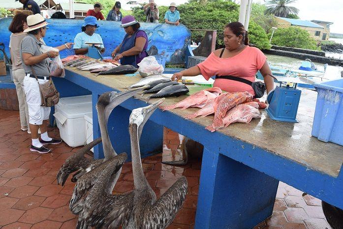 mercado-pescado-galapagos-focas-pelicanos