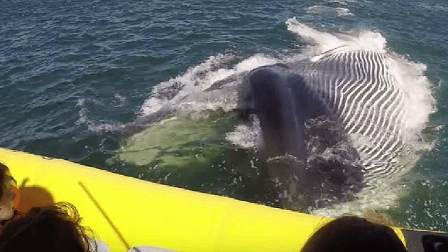 Cuando vas a ver ballenas y la ballena viene a verte a ti