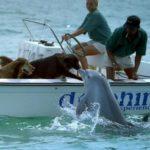 Delfin besa a un perro y salta de alegría