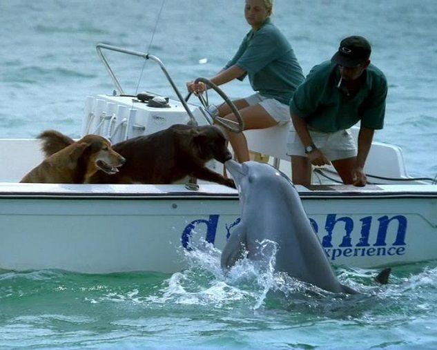 beso-delfin-perro
