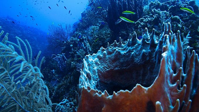 documental-bahamas-coral-