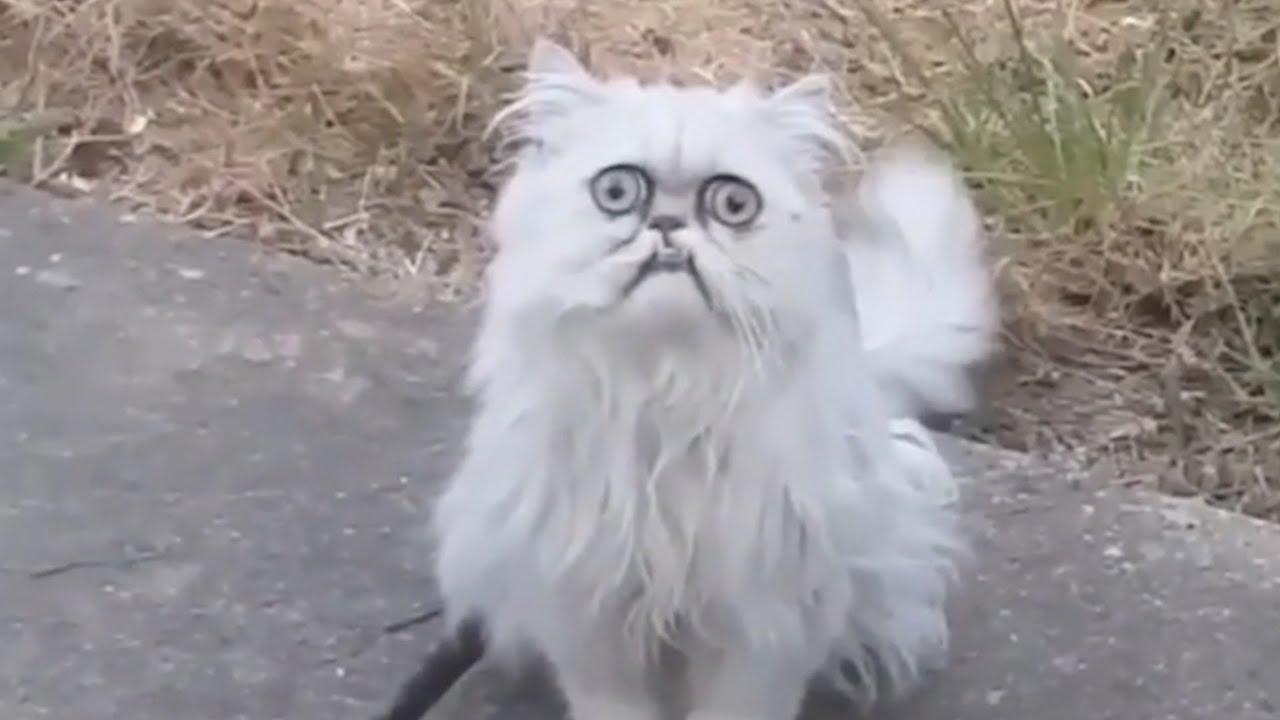 gato mas extraño