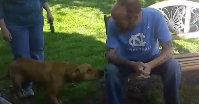 perro reconociendo dueño