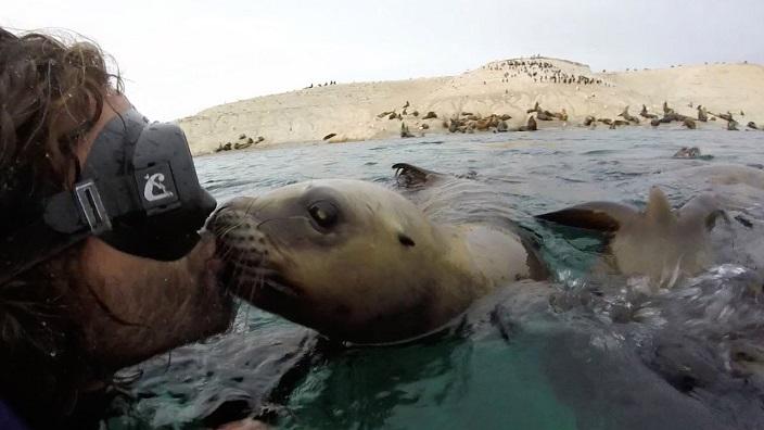 beso buzo leon marino