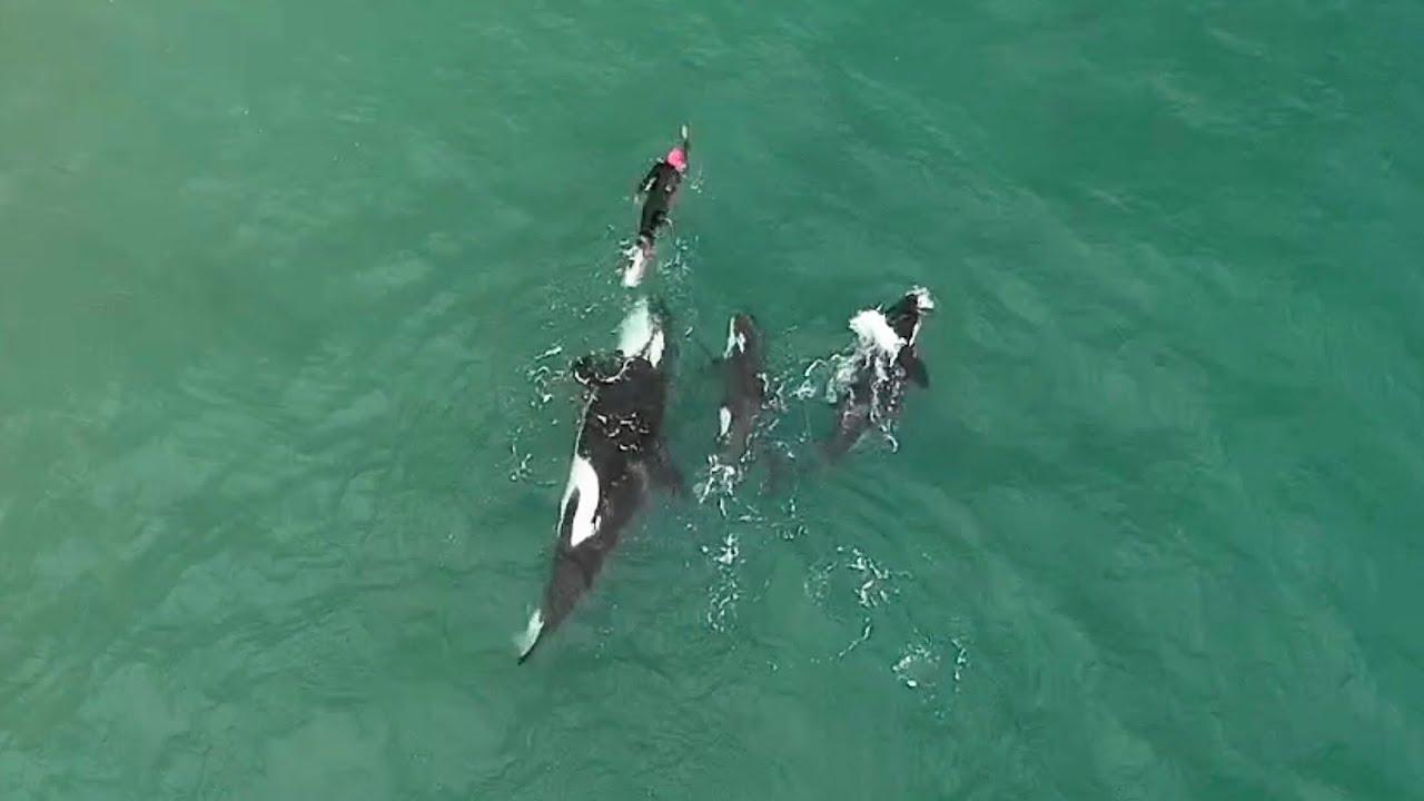 mujer nadando con orcas