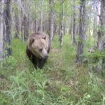 Encuentro con un oso enorme en Australia