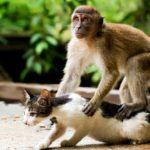 mono araña acaricia gato