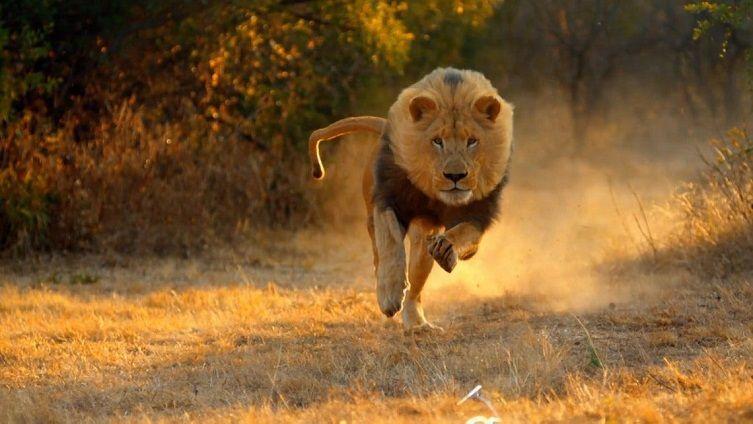 leon-cazando