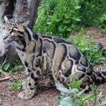 Documental – El Nebuloso Puma de la Patagonia